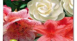 Φυτόχωμα για οξίφιλα φυτά